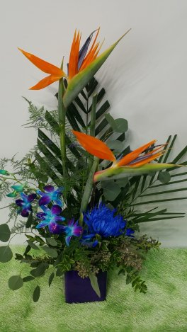 0 Birds of Paradise with Orchids to delight