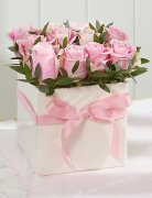 1 1 a soft pink roses