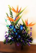 3 birds of Paradise blue Orchids