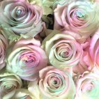 0 a Bouquet of Pastel Rainbow Roses